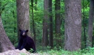 Bear in the open by Ramble~On in Bears