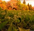 Sweet little meadow on Shining Rock