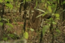 Camouflaged Deer Fawn by Ramble~On in Deer