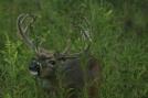 10 pt. buck by Ramble~On in Deer