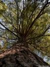 Joyce Kilmer Tree by Ramble~On in Views in North Carolina & Tennessee