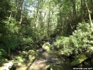 Joyce Kilmer in Summer by Ramble~On in Views in North Carolina & Tennessee