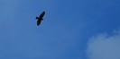Need Help With Bird Id by Ramble~On in Birds
