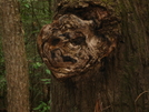 Knot Face by Ramble~On in Trail & Blazes in North Carolina & Tennessee