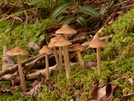 Fungus Amongus by Ramble~On in Other