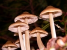 Funky Fungi by Ramble~On in Other