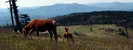 Virginia Highlands Ponies by Ramble~On in Trail & Blazes in Virginia & West Virginia