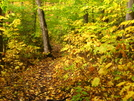 Fall scene in Maine by Ramble~On in Trail & Blazes in Maine