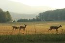 Deer by Ramble~On in Deer
