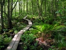 Boardwalk through the swamp by Ramble~On in Trail & Blazes in New Jersey & New York