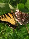 Butterfly by Ramble~On in Flowers