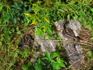 Snake Gathering by Ramble~On in Snakes