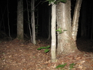 Scary Night Visitor by Ramble~On in Tent camping