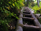 Maine's Jungle Gym by Ramble~On in Trail & Blazes in Maine