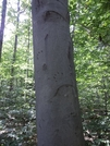 Bear Claw Marks by Ontiora in Bears