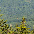 grarfton notch by hikerboy57 in Birds