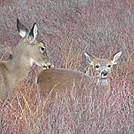a day in harriman by hikerboy57 in Deer