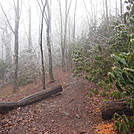 ice storm by hikerboy57 in Trail & Blazes in North Carolina & Tennessee
