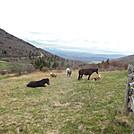 ponies by hikerboy57 in Views in Virginia & West Virginia