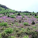 Grayson Highlands Hike