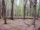 Bolen Cemetery Keyser Run Fire Road 5-1-09 by Furlough in Views in Virginia & West Virginia