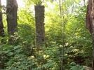 Old Chimney off of Hot Short Mountain Trail by Furlough in Trail & Blazes in Virginia & West Virginia
