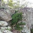 Ferns lichen and moss by Furlough in Trail & Blazes in Virginia & West Virginia