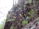 Rock Wall On The Way Down Little Devils Staircase Trail by Furlough in Views in Virginia & West Virginia