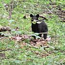 Neighbor Mtn Jeremys Run Hike by Furlough in Trail & Blazes in Virginia & West Virginia