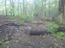 Forest Fire Damage - Salisbury, Ct May 2011 Fire, Taken 6/4/11 by Driver8 in Trail & Blazes in Connecticut