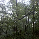 Forest at End of Stony Ledge, Mt. Greylock State Reservation, Massachusetts, July 3, 2011 by Driver8 in Views in Massachusetts