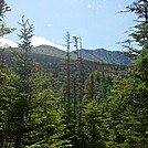 Boott Spur Ridgeline from Just Below Alpine Zone by Driver8 in Views in New Hampshire