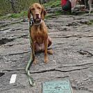 dsc00236 by stonedflea in Thru - Hikers