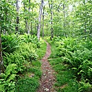 Luray, VA to Harpers Ferry by hiker1217 in Section Hikers
