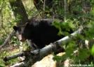 DSC_5596 by Photofanatic in Bears