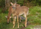 DSC_6009 by Photofanatic in Deer