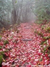 Autumn in the Smokies by RITBlake in Trail & Blazes in North Carolina & Tennessee