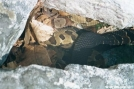 Rattlesnake by Lobo in Snakes