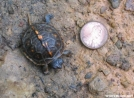 Baby Turtle by Sleepy the Arab in Other