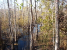 Big Cypress by elvisandedgar in Florida Trail