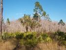Big Cypress by elvisandedgar in Florida Trail