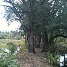 Bull Creek by elvisandedgar in Florida Trail