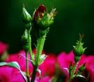 Flower by Black Wolf in Flowers