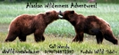 Two Kodiak Alaska Coastal Brown Bears Sparringbears Sparring by Kodiaks Wild Side! in Bears
