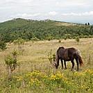 Highlands pionies by Visionmonger in Trail & Blazes in Virginia & West Virginia