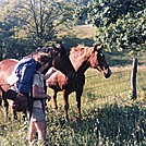 Robin and horses 1985