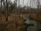 Myakka River — Flatford Swamp by Sickmont in Other Trails