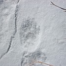 lil bear print by cricket71 in Views in Massachusetts