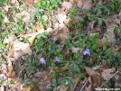 Spring flowers by hiker33 in Flowers
