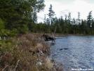 Daicey Pond Moose by TJ aka Teej in Moose